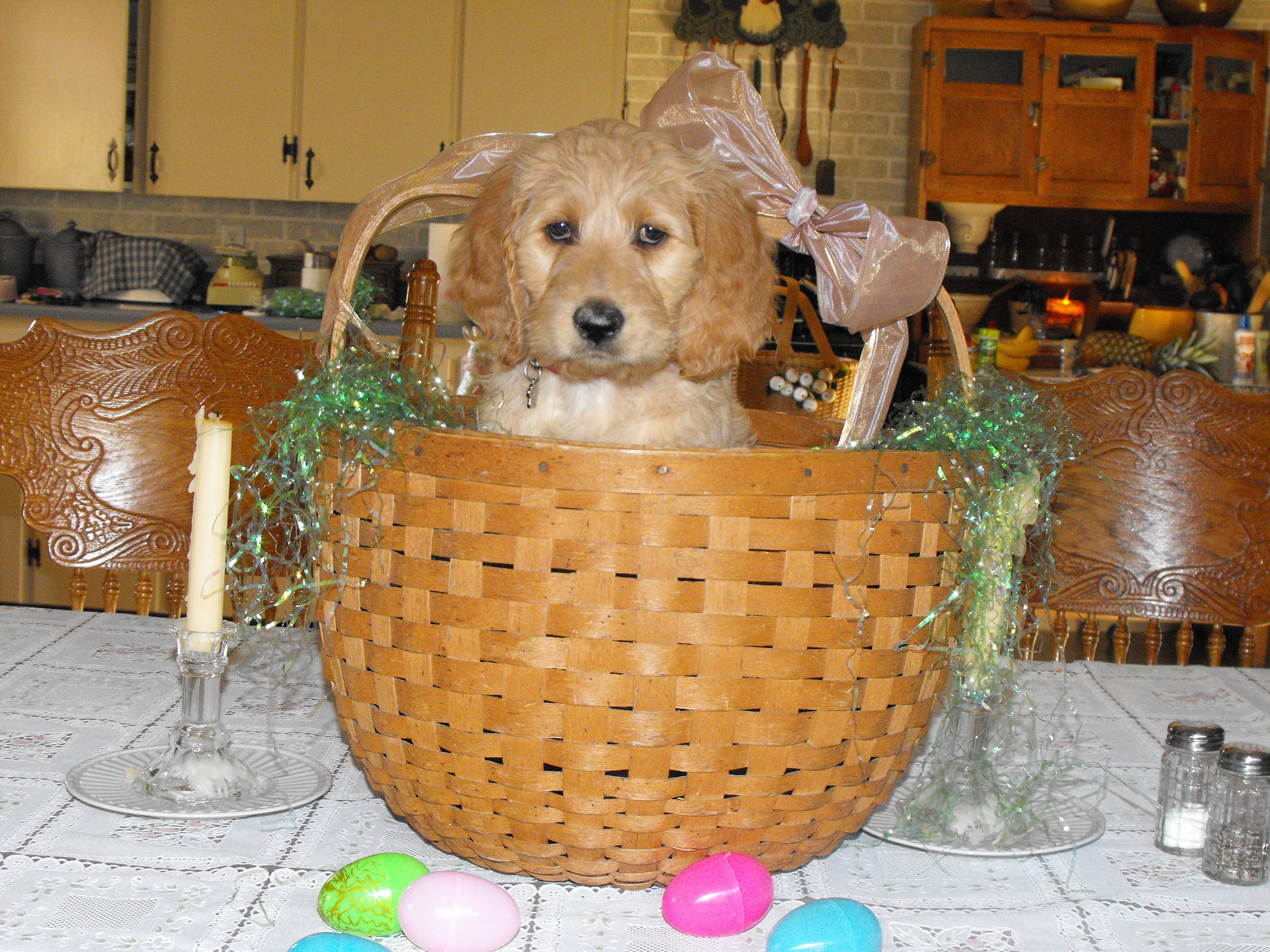 BIANCA AT EASTER